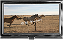 Business Card Holder Running Horses